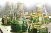 Кубань представит на форуме в Сочи проект завода по производству биотоплива