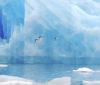 «На полях» Форума «Арктика – территория диалога» пройдут специальные мероприятия