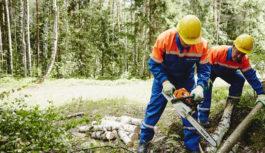 Более 350 га просеквдоль линий электропередачирасчищено в Московской области с начала 2017 года
