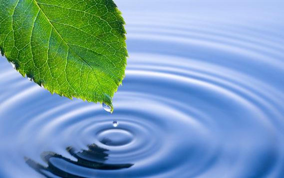 Image result for экология