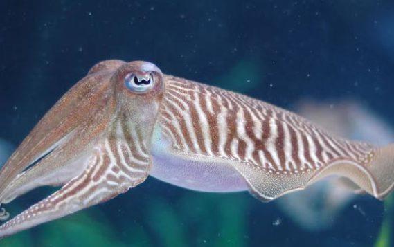 Для экологического мониторинга в арктических морях в качестве маркера будут использоваться моллюски