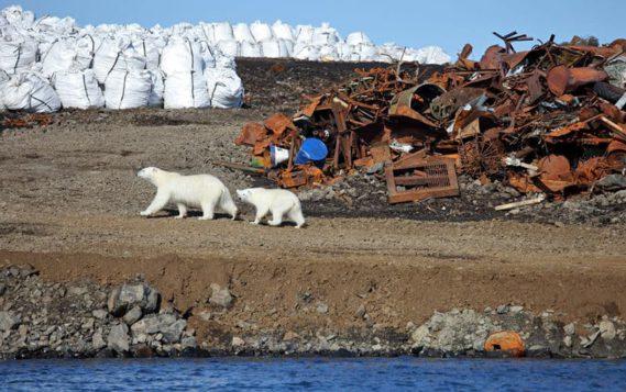 Экологи Центрального военного округа вывезут из Арктики 800 тонн мусора