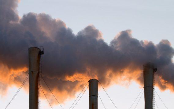WWF запускает новый рейтинг в области экологической открытости